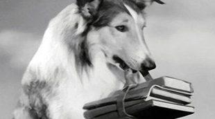 16 mascotas de cine