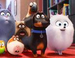 Taquilla España: 'Mascotas' es el mejor estreno del año