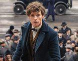 'Animales fantásticos': Ezra Miller protagoniza la escena final eliminada clave para la secuela
