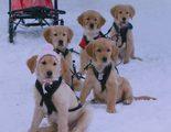 'Snow Buddies': el rodaje de Disney que se convirtió en una pesadilla para decenas de perros