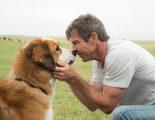 El terrible vídeo de un perro sufriendo en el rodaje de 'A Dog's Purpose' provoca una ola de indignación