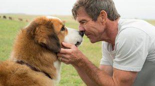 Cancelada la premiere de 'A Dog's Purpose' tras la filtración del polémico video