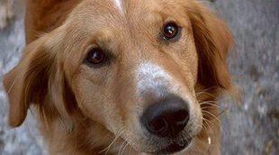 El vídeo del rodaje de 'A Dog's Purpose' sería supuestamente falso