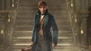¿Es Newt Scamander un espía de Dumbledore?