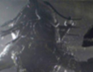Nueva imagen de 'Aliens vs Predator: requiem'