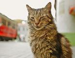 'Kedi (Gatos de Estambul)': El felino y el humano