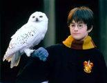 Los fans de 'Harry Potter' en Indonesia están comprando ilegalmente lechuzas como mascotas
