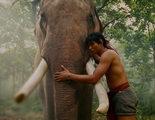 Un famoso elefante del cine de artes marciales mata a su dueño