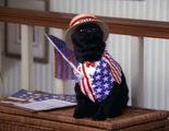 Primer vistazo a Salem, el gato de la nueva versión de la bruja Sabrina que prepara Netflix
