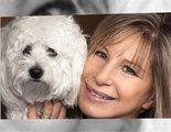 Barbra Streisand ha clonado a su perro dos veces