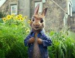 'Peter Rabbit': El conejo travieso que quiere merendarse al oso Paddington