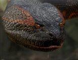 De 'Trampa mortal' a la saga 'Anaconda': Los reptiles más memorables del cine