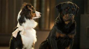 Recortan 'Superagente canino' en Australia por las quejas de padres