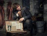 Otro conocido personaje de la saga 'Harry Potter' podría aparecer en 'Animales Fantásticos: Los crímenes de Grindelwald'