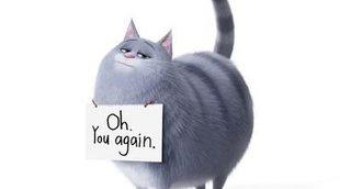 La gata Chloe ya tiene su propio tráiler de 'Mascotas 2'