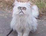 El caso viral del gato terrorífico que acosa a Michael Rapaport