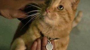 El gato de 'Capitana Marvel' tiene su propio póster