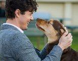 El cachorro de 'Uno más de la familia' te va a enamorar en esta escena exclusiva