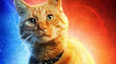 Todo lo que tienes que saber de Goose, el gato de 'Capitana Marvel'