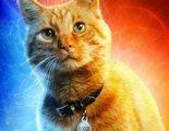 El peor enemigo de Brie Larson en el rodaje de 'Capitana Marvel': su alergia a los gatos