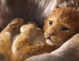'El Rey León': Impresionante tráiler completo del remake, no estamos llorando, tú estás llorando