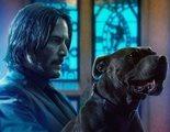 'John Wick 3: Parabellum': Cientos de gatos casi arruinan el rodaje de una de las escenas de acción