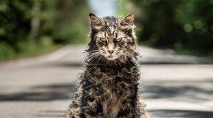 Muere Leo, el gato protagonista de 'Cementerio de animales'