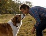 Dennis Quaid juega con Bailey en este clip exclusivo de 'Tu mejor amigo: Un nuevo viaje'
