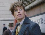 'Animales Fantásticos': Eddie Redmayne quiere que Hagrid se una a la saga