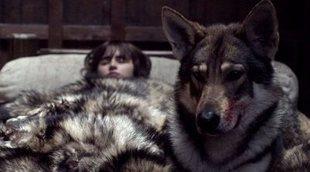 Muere Verano, el lobo de Bran Stark en 'Juego de Tronos'