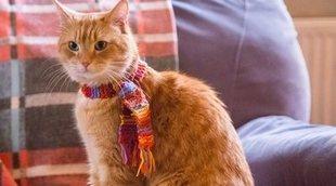 Muere el gato Bob, que salvó la vida de un hombre e inspiró libros y películas