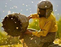 'Honeyland': El milagro de las abejas
