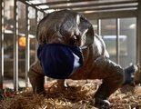 'Jurassic World: Dominion' pone en pausa su rodaje por varios positivos en coronavirus