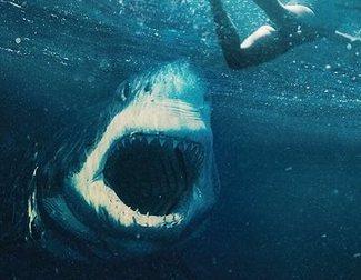 Crítica de 'Tiburón blanco'