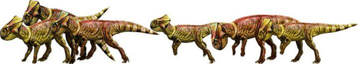 Microceratus de 'Jurassic World'