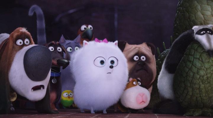 'Mascotas'