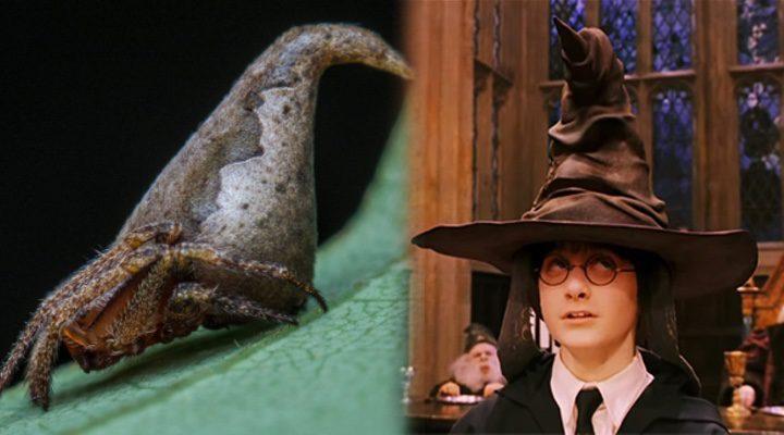 'Harry Potter' v araña