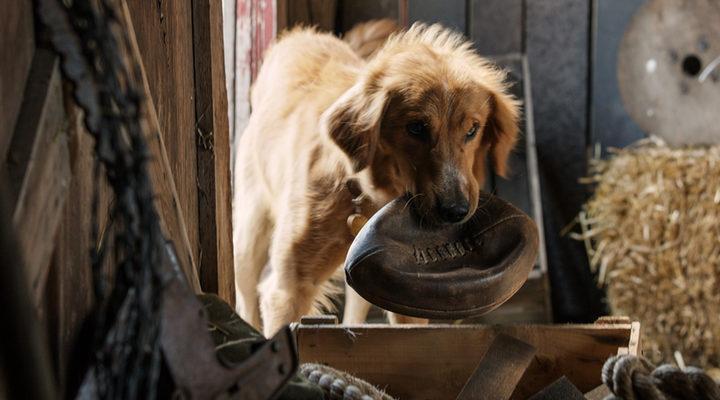 'A Dog's Purpose'