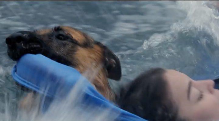 El pastor alemán de 'A Dog's purpose' rescatando a una chica
