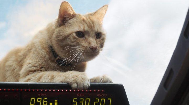 Goose, el gato de Carol Danvers' en 'Capitana Marvel'