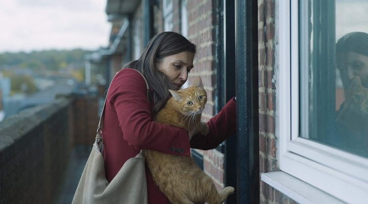 Un gato en la pared
