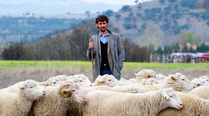 'Las ovejas no pierden el tren'
