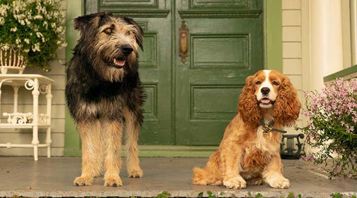 Tessa Thompson y Justin Theroux protagonizan 'La dama y el vagabundo' para Disney+