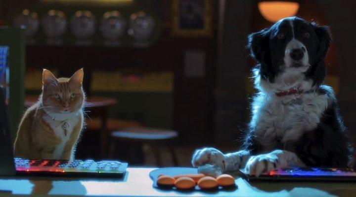 Como perros y gatos. La patrulla unida