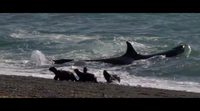 Making of: 'El faro de las orcas'