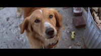 'A Dog's Purpose' trailer