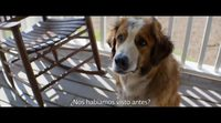 'A Dog's Purpose' Spanish subtitled trailer
