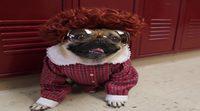 'Stranger Things' versión Stranger Pugs