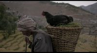 https://www.ecartelera.com/videos/trailer-subtitulado-ingles-the-black-hen-kalo-pothi/