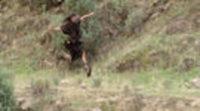 https://www.ecartelera.com/videos/trailer-entrelobos/